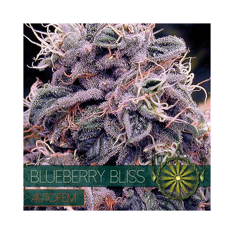 Blueberry Bliss Autofem