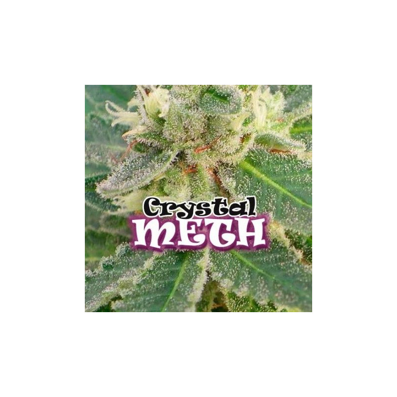 Crystal M.E.T.H. Dr Underground