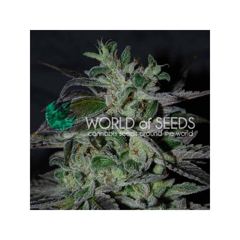 Strawberry Blue World of Seeds