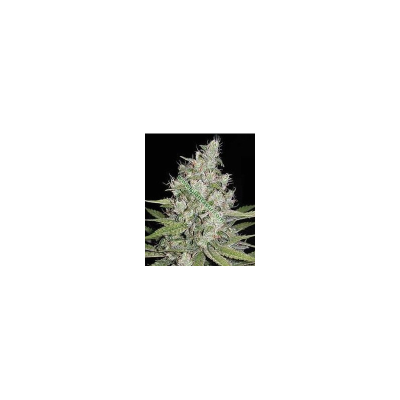 Homegrow Cheese