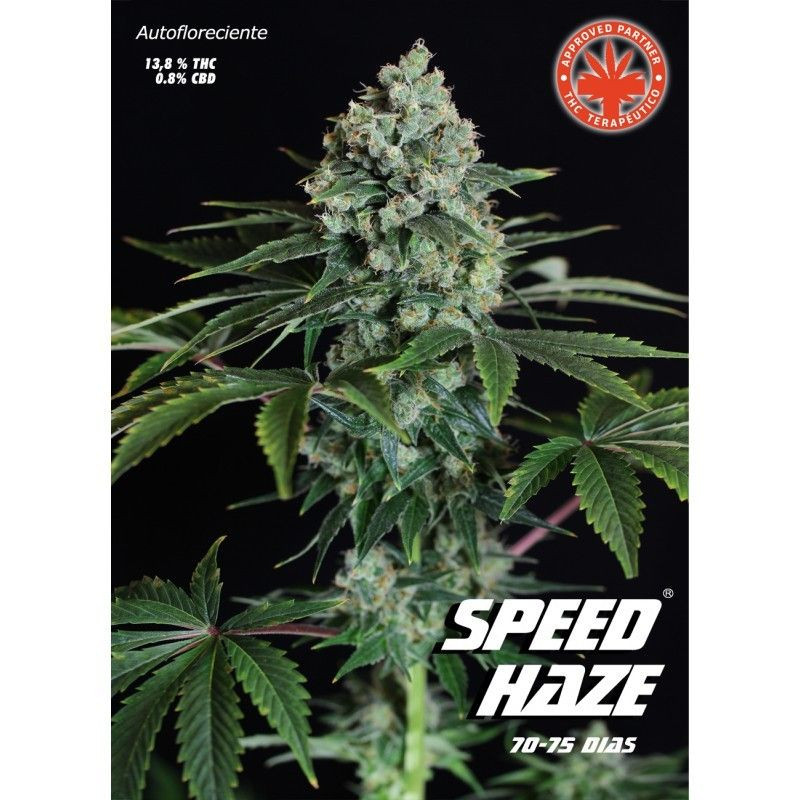Speed Haze