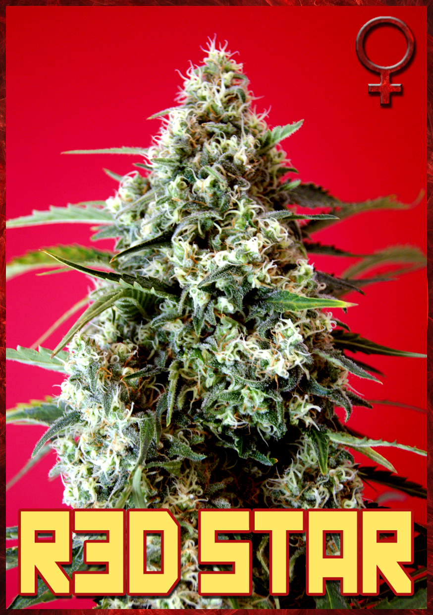 Red Star de Rockwell Seeds