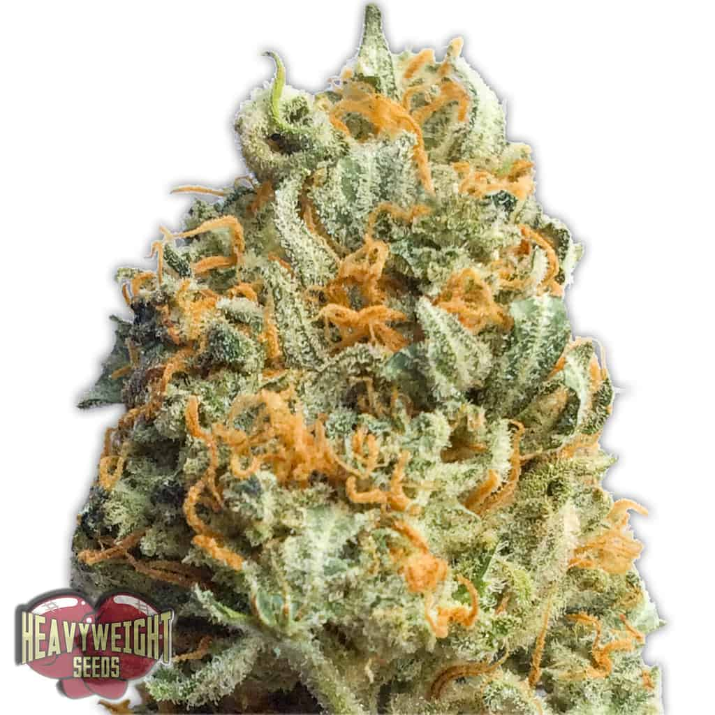 Fully Loaded Heavyweight Seeds