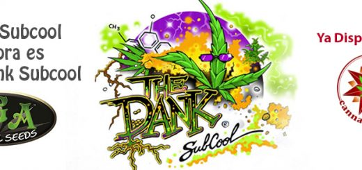 subcool's the dank